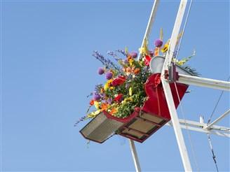 RHS Tatton Flower Show - Knutsford, Cheshire