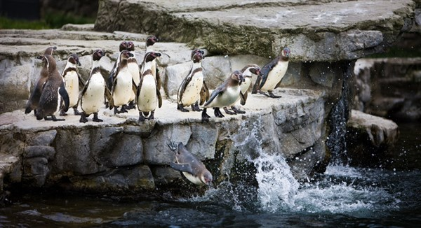 Reays Day Trip To Chester Amp Chester Zoo Day Excursion